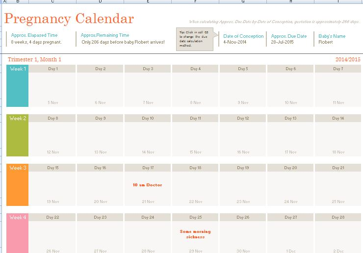 Fetal or Pregnancy Calendar Template